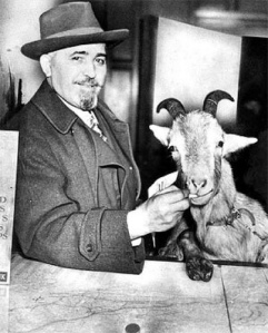 This may or may not be a picture of the actual goat the famous curse on the Cubs alludes to.